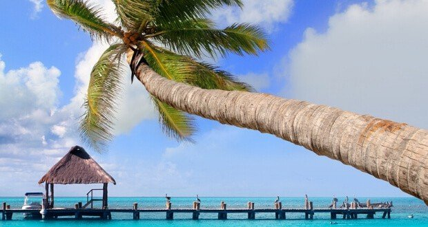 Palm tree over water and hut