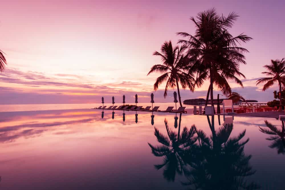 purple sunset on a beach with palm tree