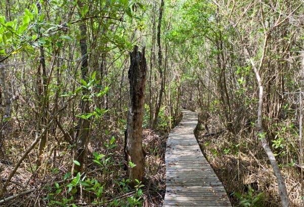 Cayman Islands Hiking Trails - Best Caribbean Island for Hiking