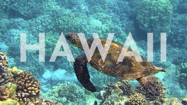 Swimming sea turtle in Hawaii