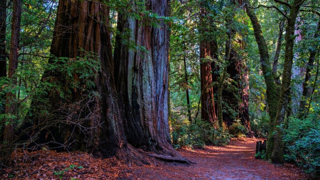 redwood trail hawaii